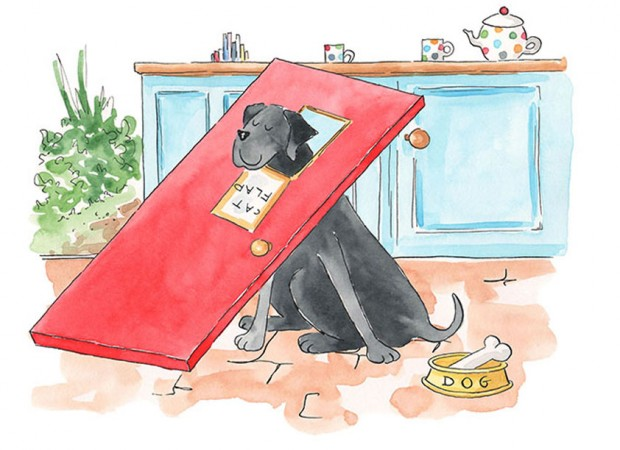 Front Cover Illustration from Geronimo the Dog who thinks He's a Cat