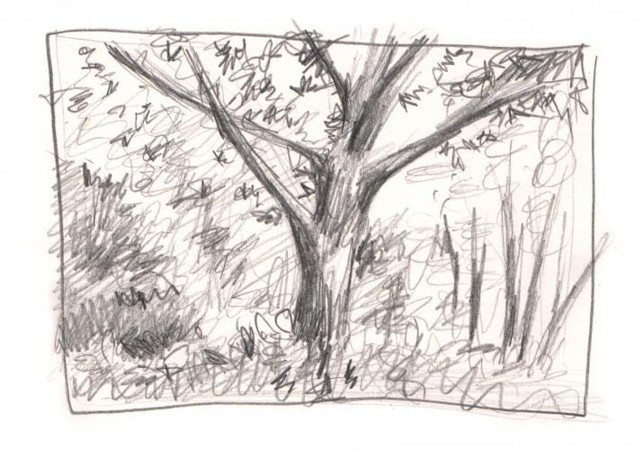 Observational sketch