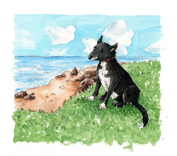 Commissioned Pet Portrait of Sweep